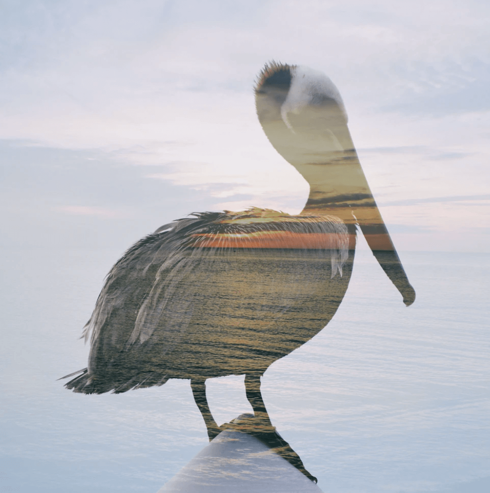 double exposure photography nature