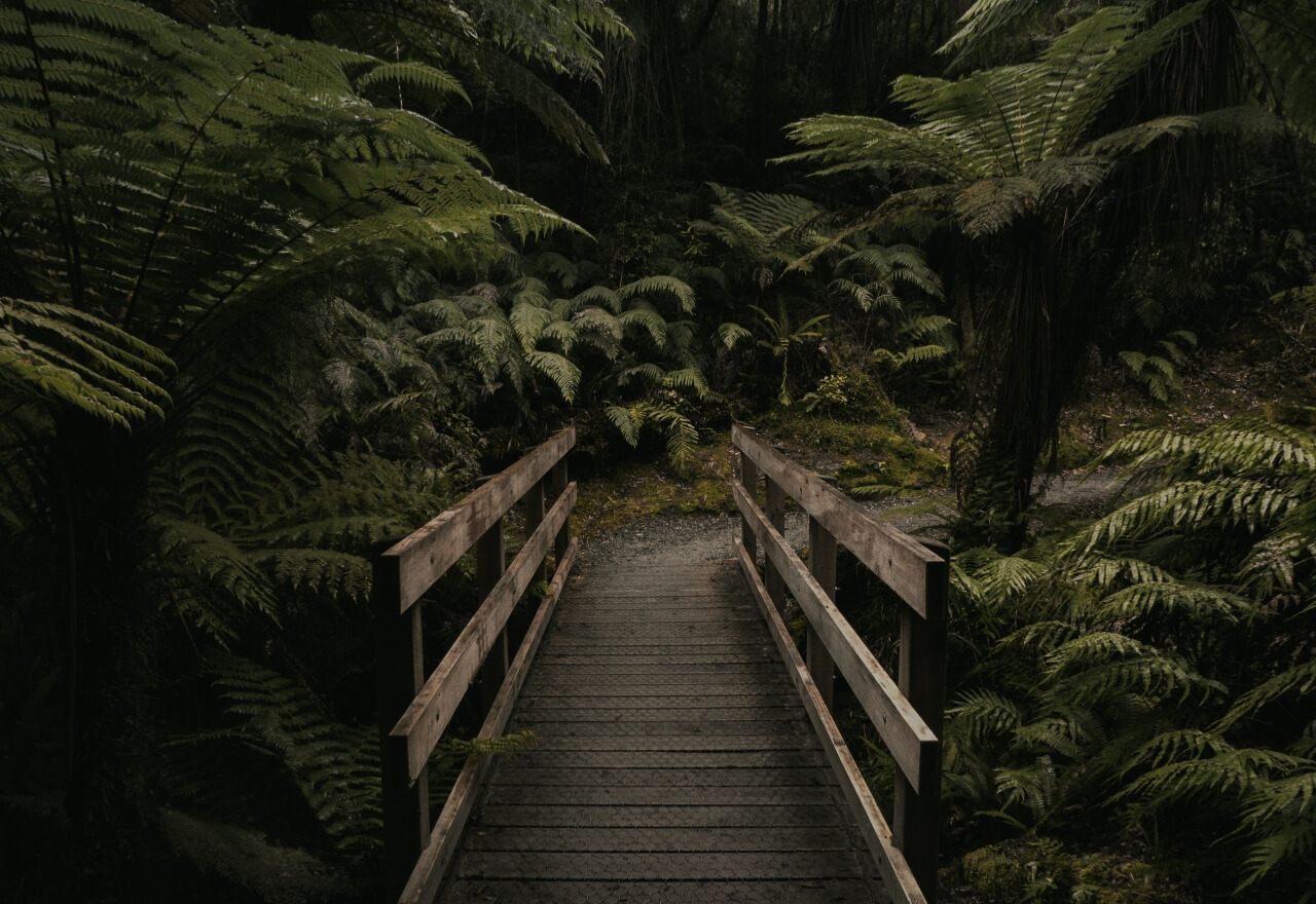 moody nature photography 2020